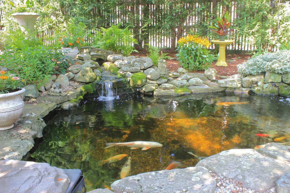 Best ideas about Backyard Koi Pond . Save or Pin Backyard Koi Ponds and Water Gardens are a Growing Trend Now.