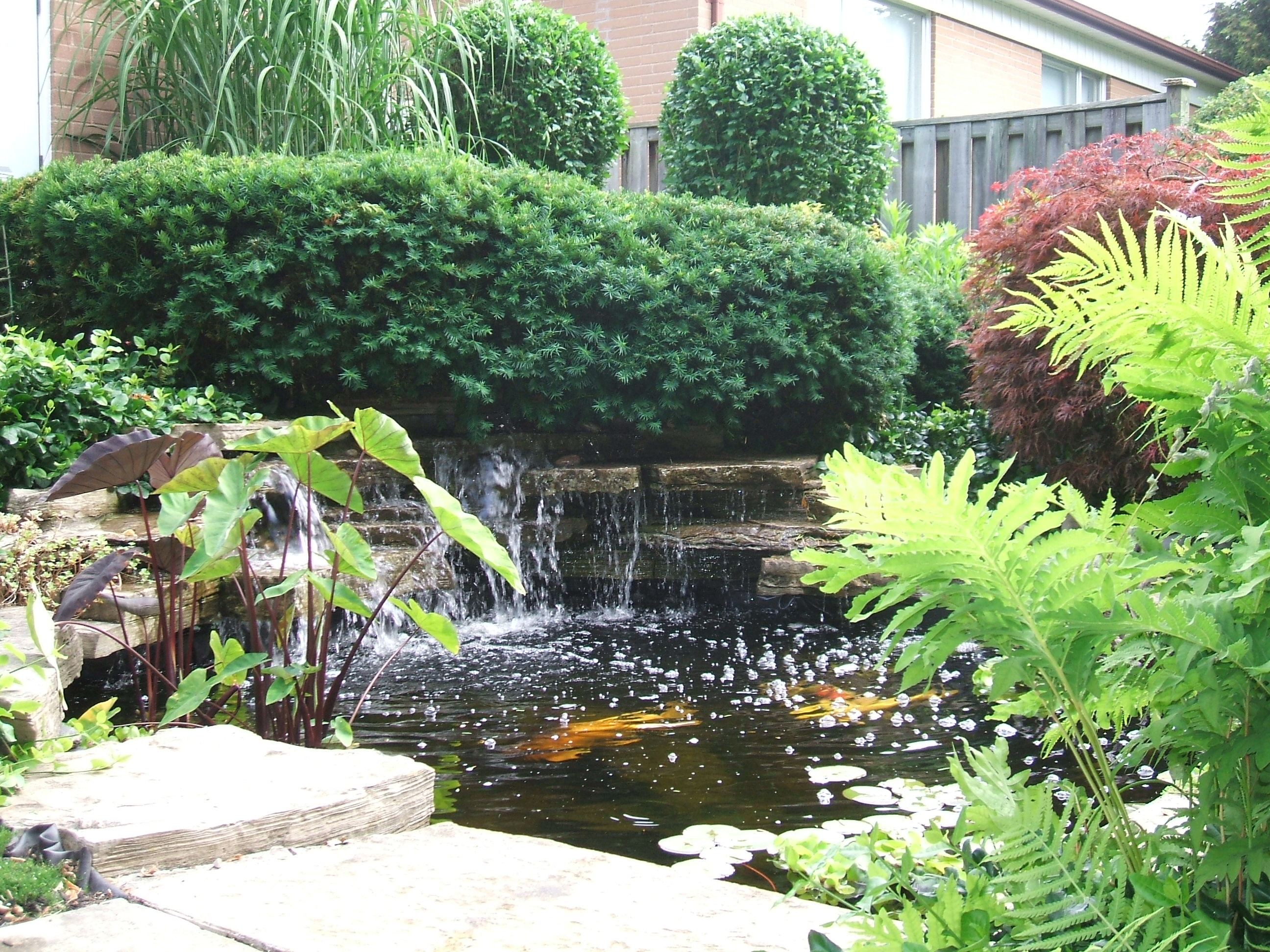 Best ideas about Backyard Koi Pond . Save or Pin A Safe Simple Way to Prepare your Backyard Pond Koi and Now.