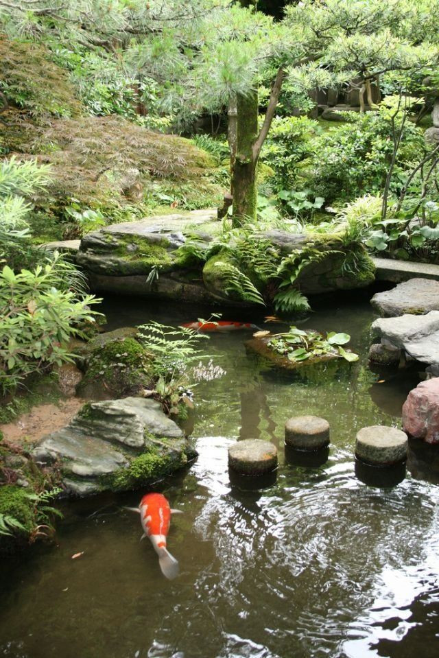 Best ideas about Backyard Koi Pond . Save or Pin Best 25 Koi ponds ideas on Pinterest Now.