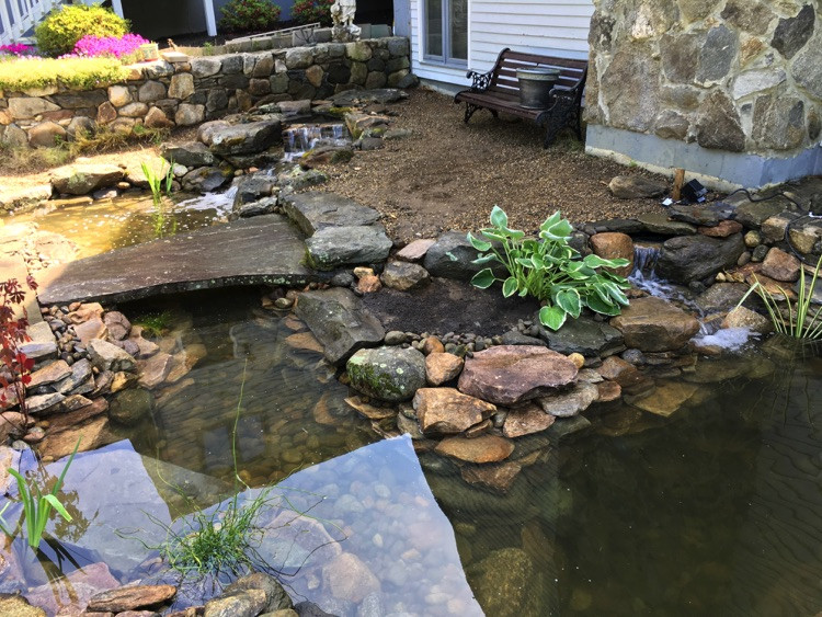 Best ideas about Backyard Koi Pond . Save or Pin Koi Pond Water gardens Middle County MA Now.