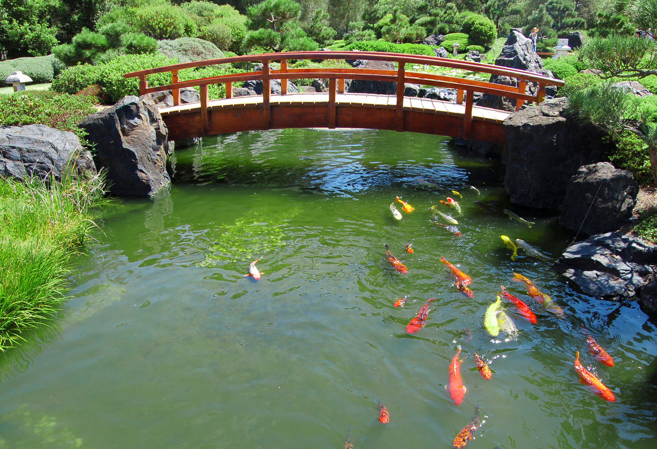 Best ideas about Backyard Koi Pond . Save or Pin DIY Build a Natural Fish Pond in Your Backyard Now.