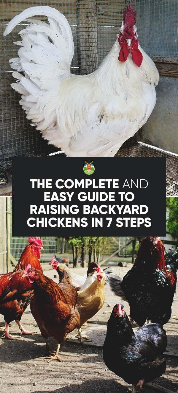 Best ideas about Best Backyard Chickens . Save or Pin Best 25 Backyard Chickens ideas on Pinterest Now.