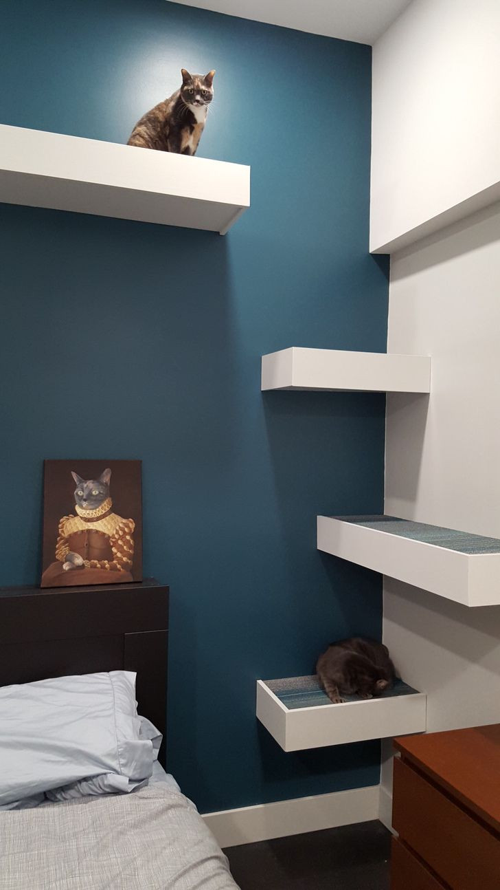 Best ideas about Cat Wall Shelves DIY . Save or Pin 25 best ideas about Cat Shelves on Pinterest Now.