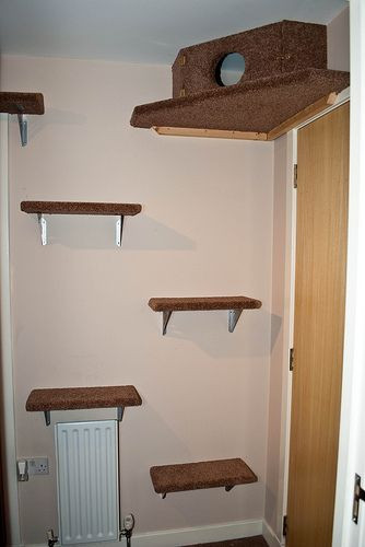 Best ideas about Cat Wall Shelves DIY . Save or Pin Tricia s Cat Playground Cat Stuff Now.