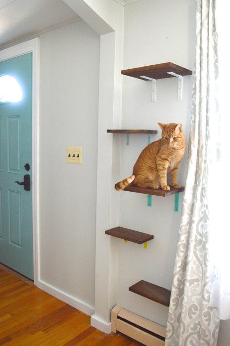 Best ideas about Cat Wall Shelves DIY . Save or Pin NOT YOUR TYPICAL CAT TREE 3 CREATIVE DIY CAT PERCHES Now.
