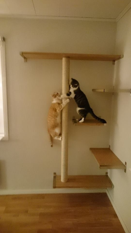 Best ideas about Cat Wall Shelves DIY . Save or Pin 570 best images about Cat • Kitten on Pinterest Now.