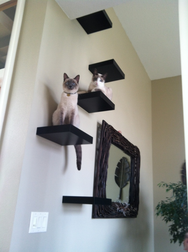 Best ideas about Cat Wall Shelves DIY . Save or Pin Creating a Cat Sanctuary at Home pamperedpetz Now.
