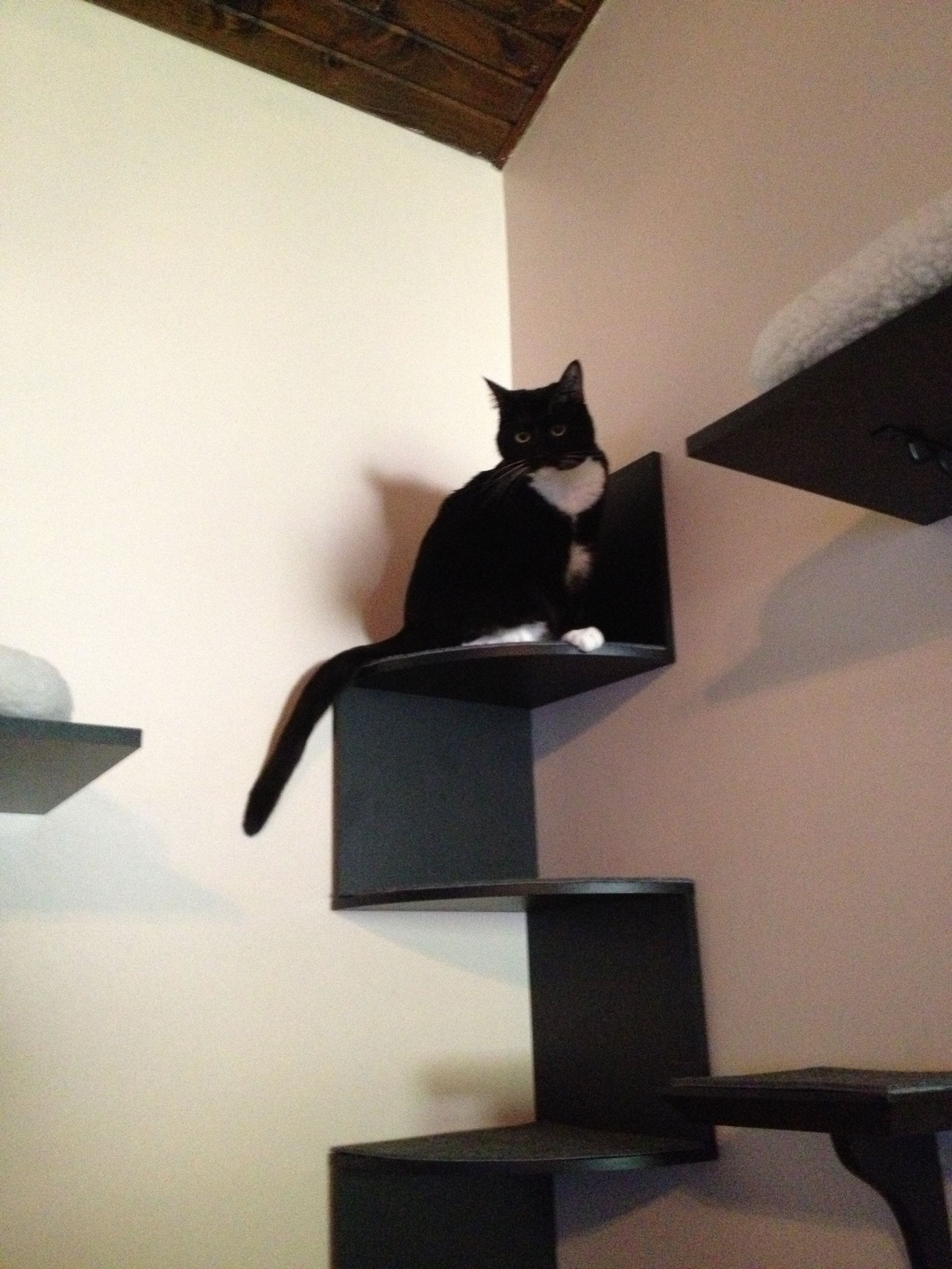 Best ideas about Cat Wall Shelves DIY . Save or Pin DIY cat wall cat shelves cats CatShelves Now.