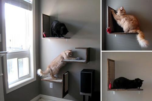 Best ideas about Cat Wall Shelves DIY . Save or Pin Jake and Karen's DIY Modern Cat Platforms • hauspanther Now.