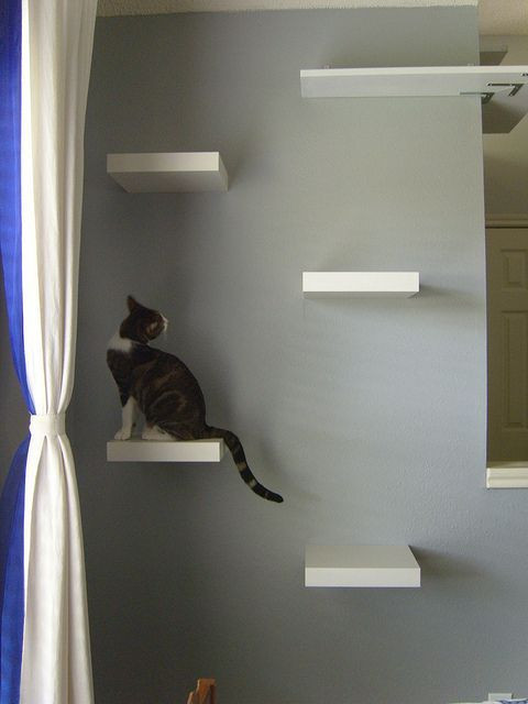 Best ideas about Cat Wall Shelves DIY . Save or Pin 37 IKEA Lack Shelves Ideas And Hacks DigsDigs Now.