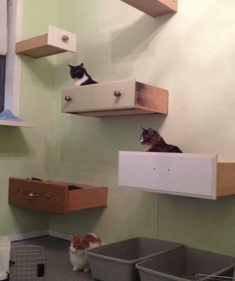 Best ideas about Cat Wall Shelves DIY . Save or Pin Best 25 Cat shelves ideas on Pinterest Now.