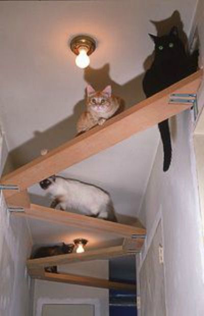 Best ideas about Cat Wall Shelves DIY . Save or Pin Cat Tree Plans In Space Outta Control Cat Shelves Now.