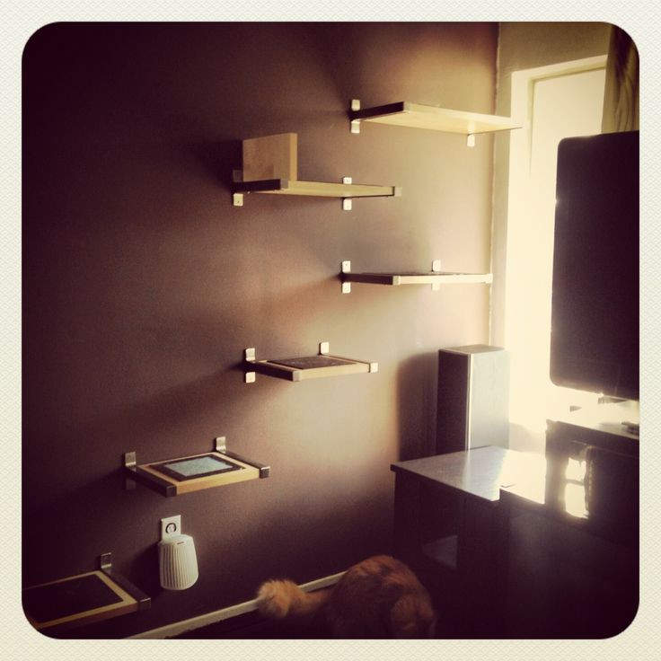 Best ideas about Cat Wall Shelves DIY . Save or Pin DIY cat shelves For the Cats Now.