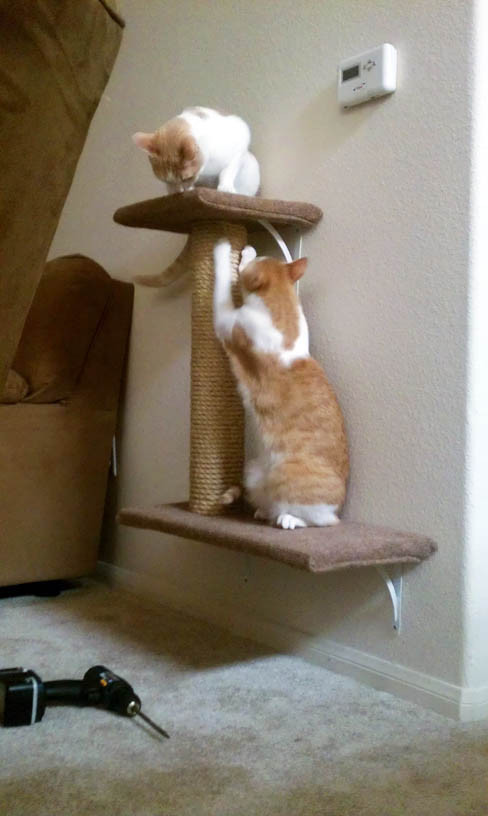 Best ideas about Cat Wall Shelves DIY . Save or Pin How we made our DIY wall mounted cat tree Now.