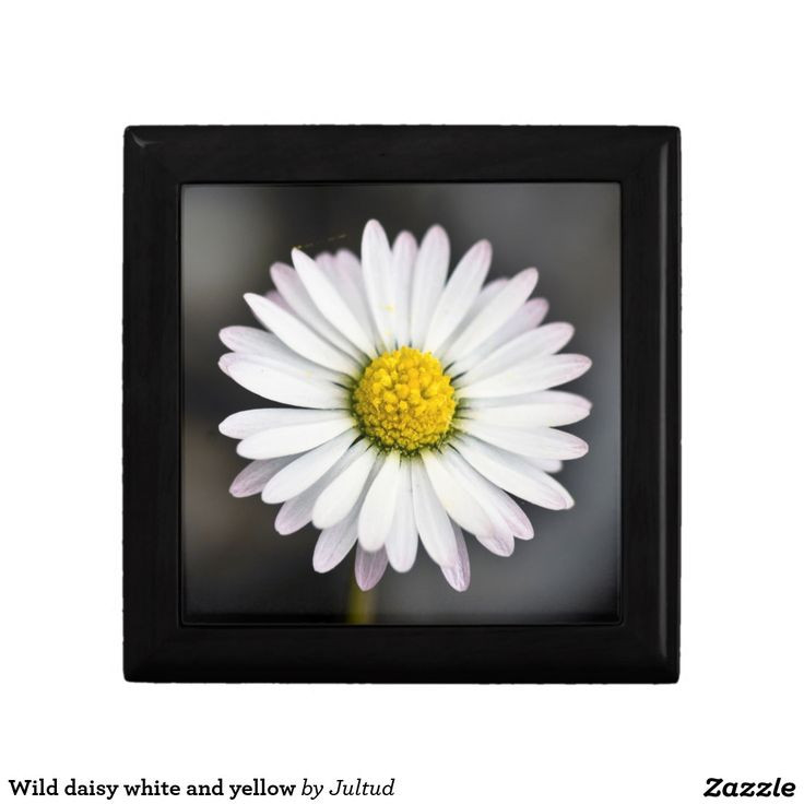 Best ideas about Daisy Kitchen Decorations . Save or Pin Wild daisy white and yellow t box Now.