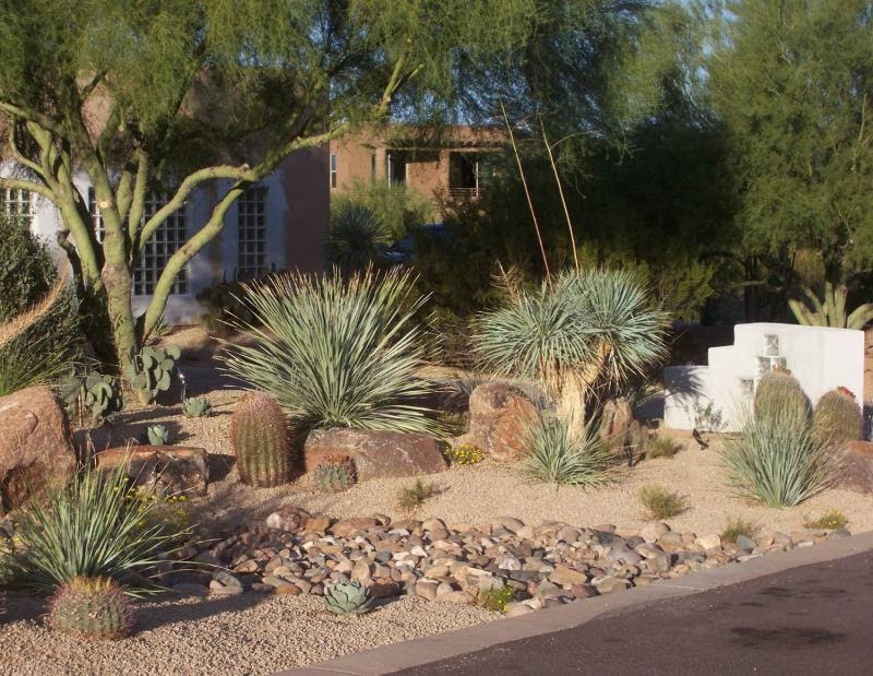 Best ideas about Desert Garden Ideas . Save or Pin BACKYARD LANDSCAPING IDEAS LANDSCAPING IDEAS Now.