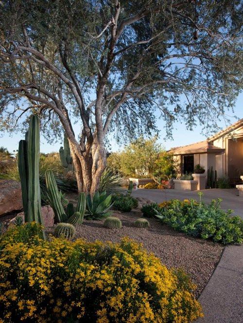 Best ideas about Desert Garden Ideas . Save or Pin Backyard Desert Landscaping Home Design Ideas Now.