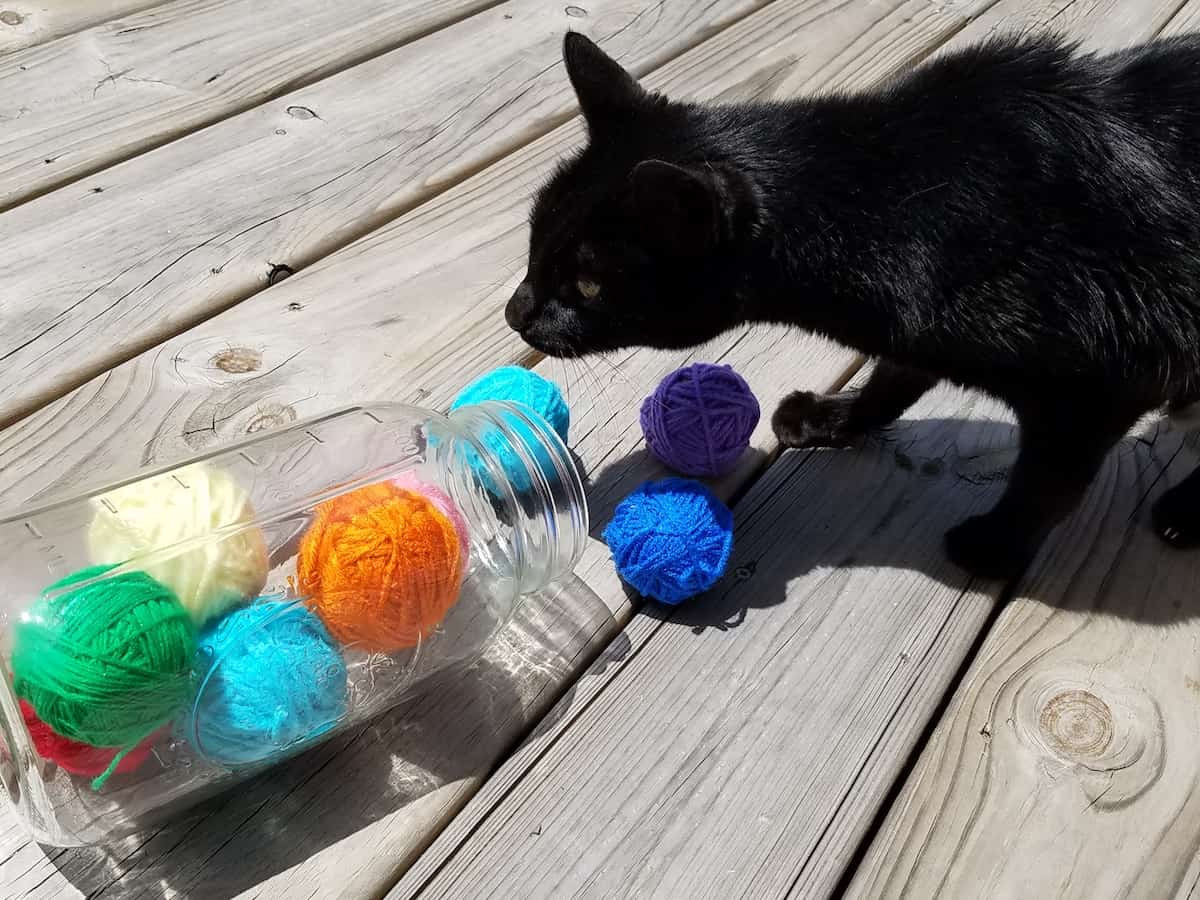 Best ideas about DIY Catnip Toys . Save or Pin How to Make an Easy Homemade Cat Toy No Sewing No Knitting Now.