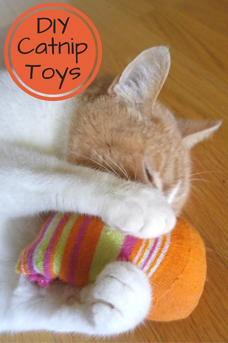 Best ideas about DIY Catnip Toys . Save or Pin Homemade Catnip Toys What To Do With All Those Socks Now.