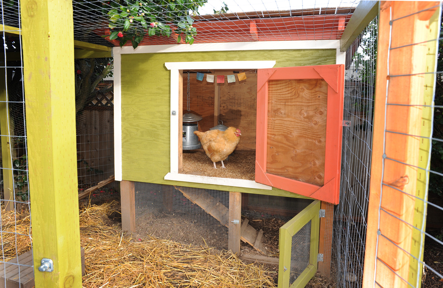 Best ideas about DIY Chicken Coop Plans . Save or Pin Chicken Coop Plans that Are Easy to Do Coops And Cages™ Now.