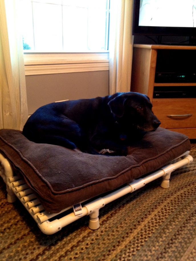 Best ideas about DIY Dog Bed For Large Dogs . Save or Pin Elevated Dog Bed Diy Choose A Special Hammock Dog Bed Now.