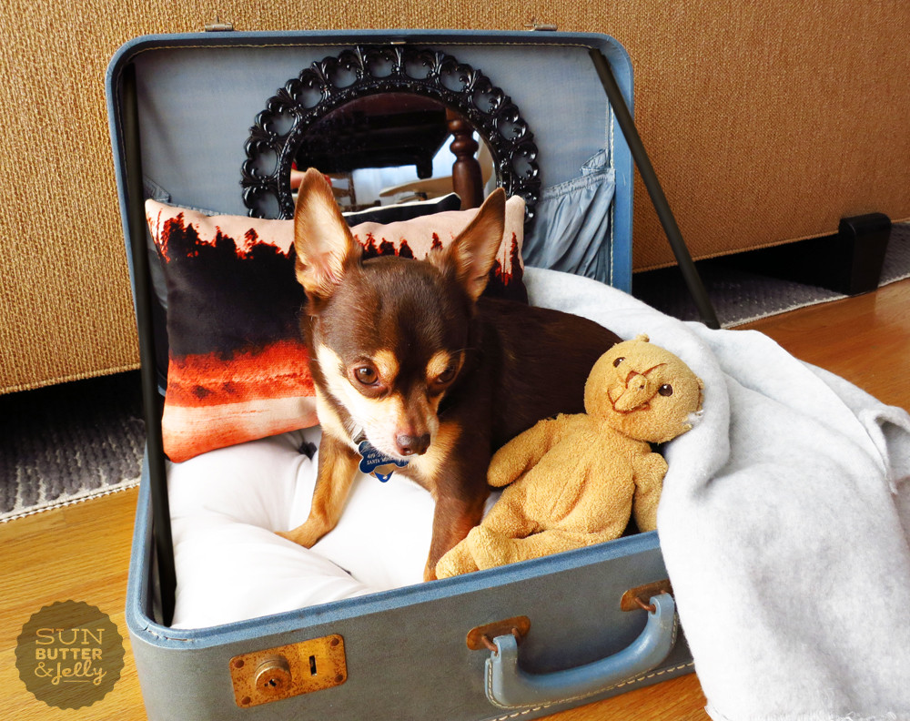Best ideas about DIY Dog Bed For Large Dogs . Save or Pin DIY Vintage Suitcase Dog Bed Now.