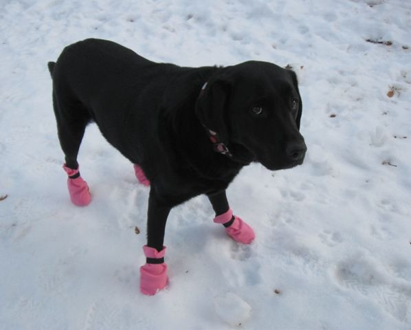 Best ideas about DIY Dog Booties No Sew . Save or Pin 10 Minute Dog Boots Now.