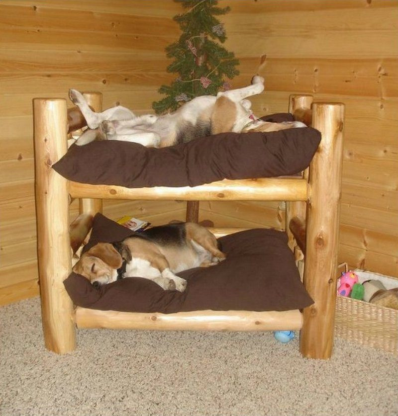 Best ideas about DIY Dog Bunk Bed . Save or Pin Fabulous Dog Bed Design Ideas Your Pets Will Enjoy Now.