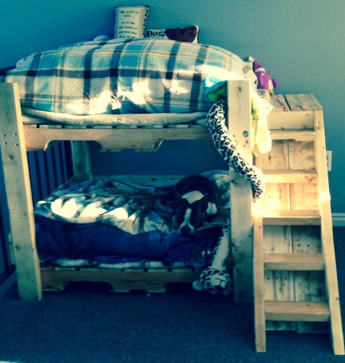 Best ideas about DIY Dog Bunk Bed . Save or Pin How to build a bunk bed for your pets Now.