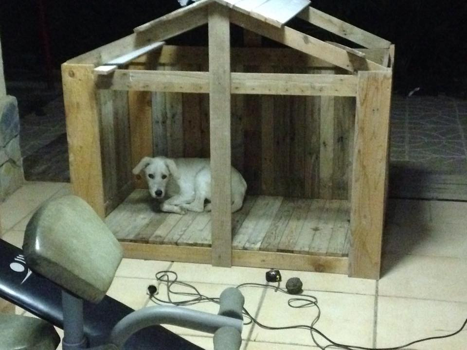 Best ideas about DIY Dog Shelter . Save or Pin Animal Shelters Made from Pallets Now.