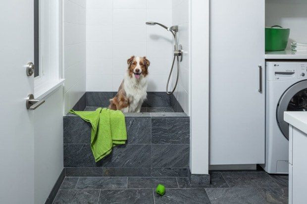 Best ideas about DIY Dog Shower . Save or Pin Best 25 Dog shower ideas on Pinterest Now.