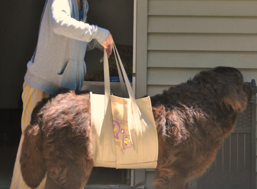 Best ideas about DIY Dog Sling . Save or Pin DIY Dog Sling For Dogs The Anna Bird Blog Now.