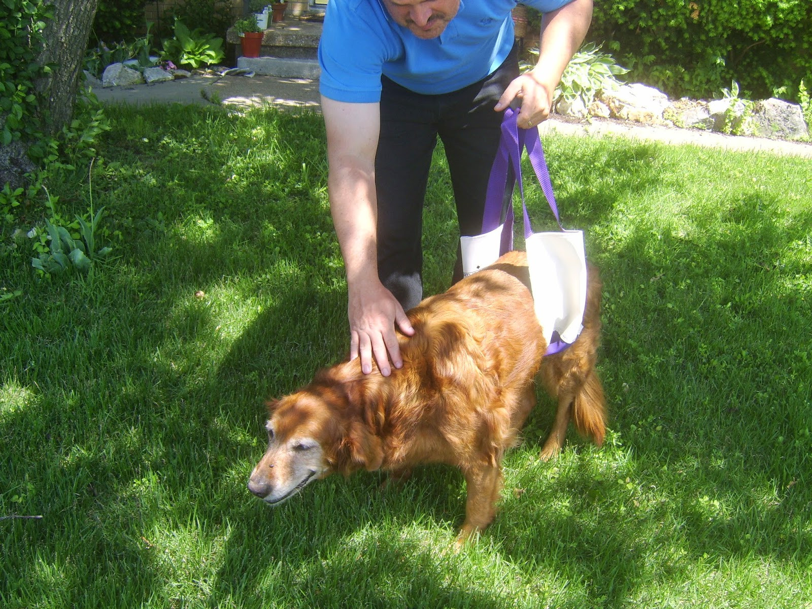 Best ideas about DIY Dog Sling . Save or Pin Pondicherry cottage How to make your own Dog Lift Sling DIY Now.