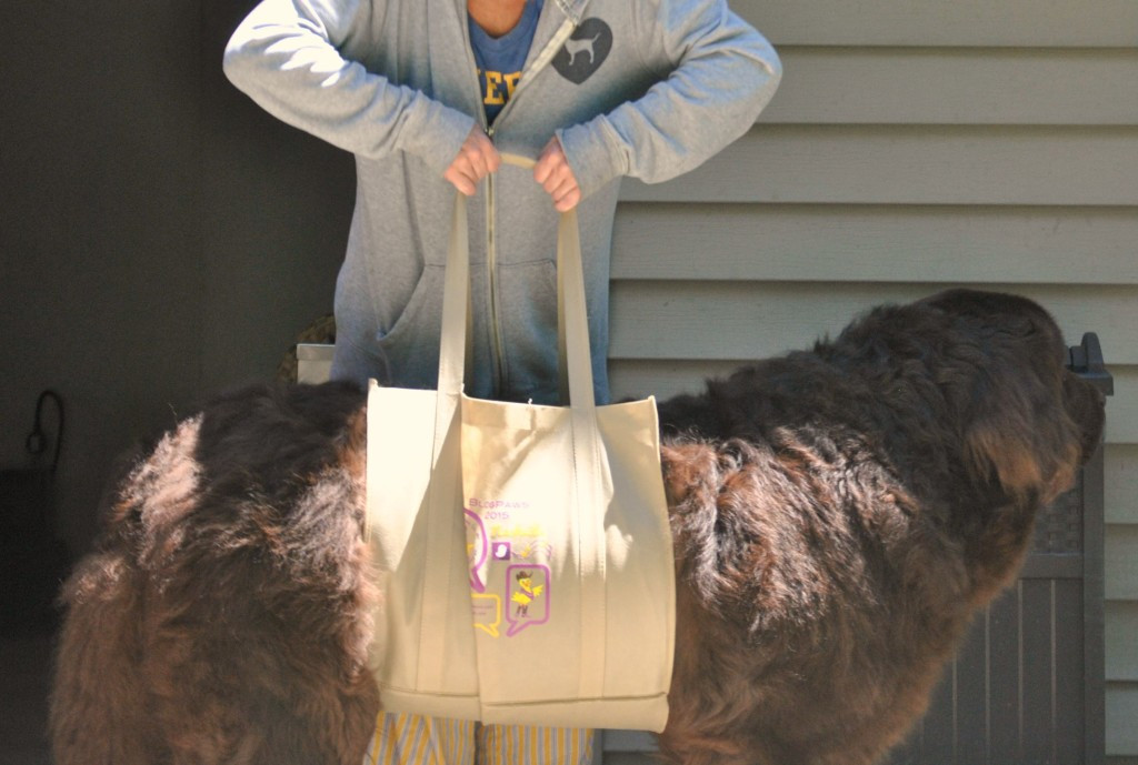 Best ideas about DIY Dog Sling . Save or Pin DIY Lift Harness For Dogs mybrownnewfies Now.