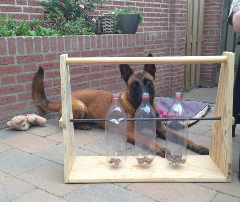 Best ideas about DIY Dog Treat Dispenser . Save or Pin Spin out dog treat game Now.