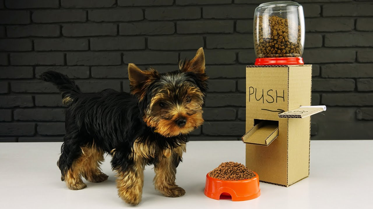 Best ideas about DIY Dog Treat Dispenser . Save or Pin DIY Puppy Dog Food Dispenser from Cardboard at Home Now.