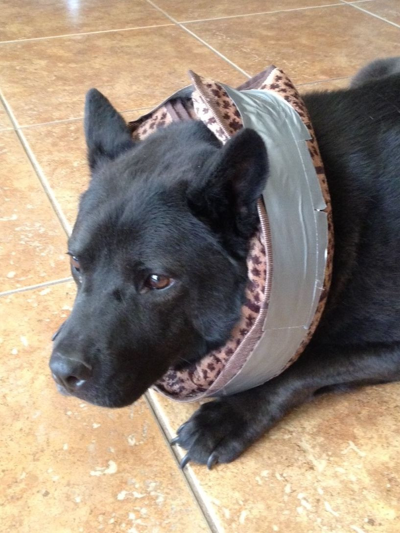 Best ideas about DIY E Collar For Dog . Save or Pin Homemade alternative to the dog e collar or more Now.