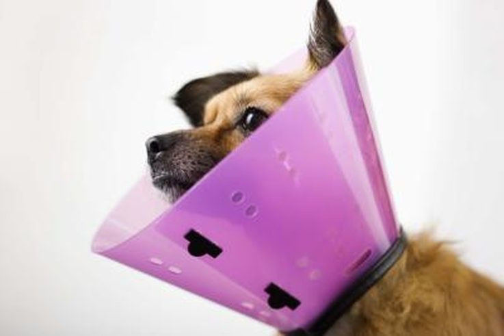 Best ideas about DIY E Collar For Dog . Save or Pin Homemade Elizabethan Collars for Dogs Now.