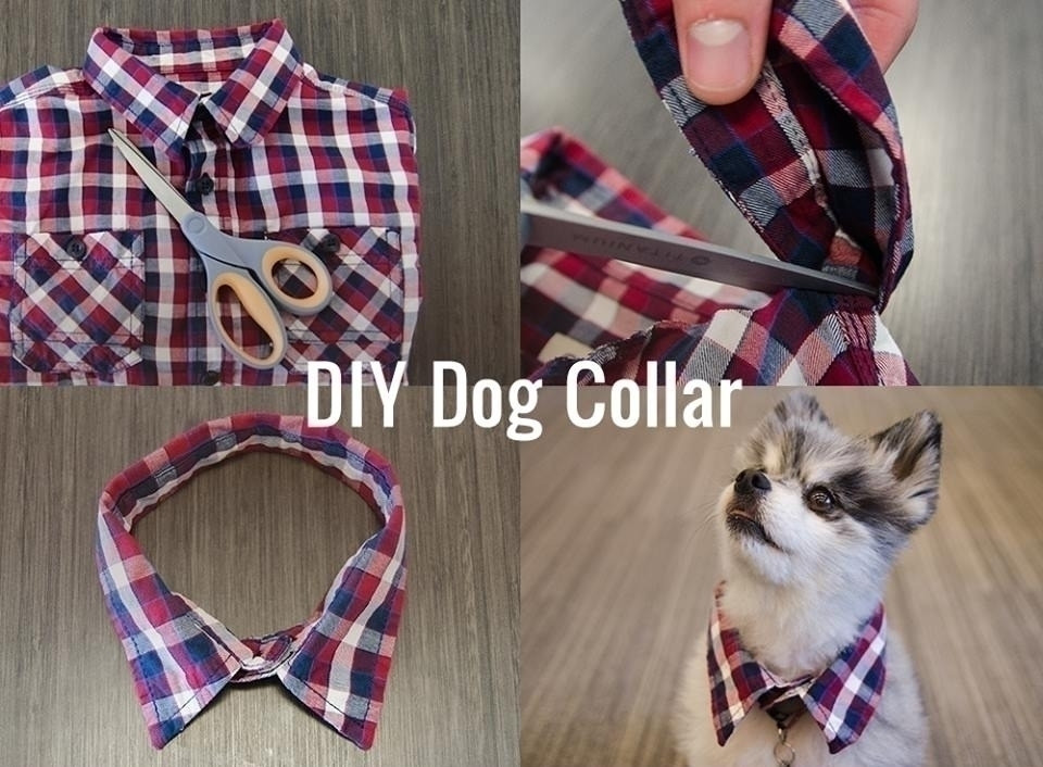 Best ideas about DIY E Collar For Dog . Save or Pin DIY Dog Collar Now.