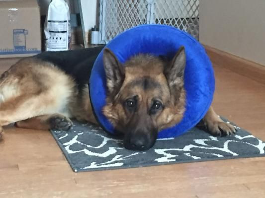 Best ideas about DIY E Collar For Dog . Save or Pin 25 best ideas about Dog cone collar on Pinterest Now.