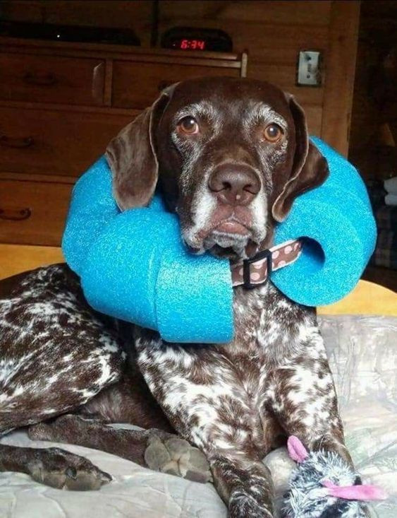 Best ideas about DIY E Collar For Dog . Save or Pin 7 DIY Dog E Cones Seven E Collars You Can Make at Home Now.