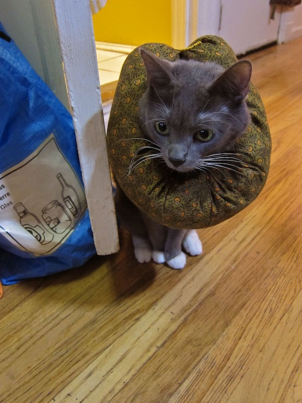 Best ideas about DIY E Collar For Dog . Save or Pin DIY E Collar Alternative for My OCD Cat Now.