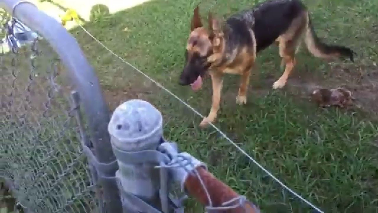 Best ideas about DIY Electric Fences . Save or Pin DIY Electric fence install and setup for a German Shepherd Now.