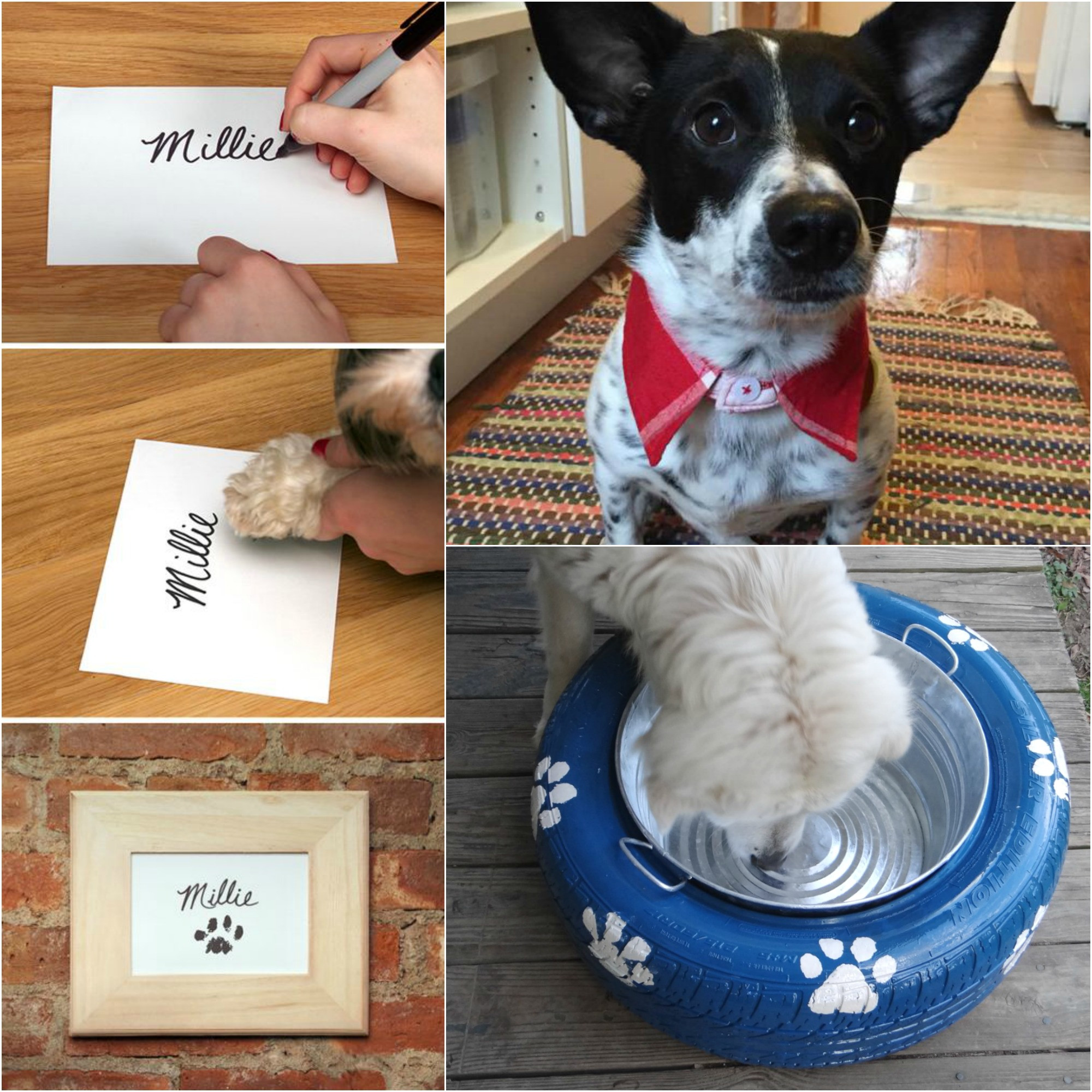 Best ideas about DIY For Dog . Save or Pin 10 DIY Projects for Dog Lovers The Realistic Mama Now.
