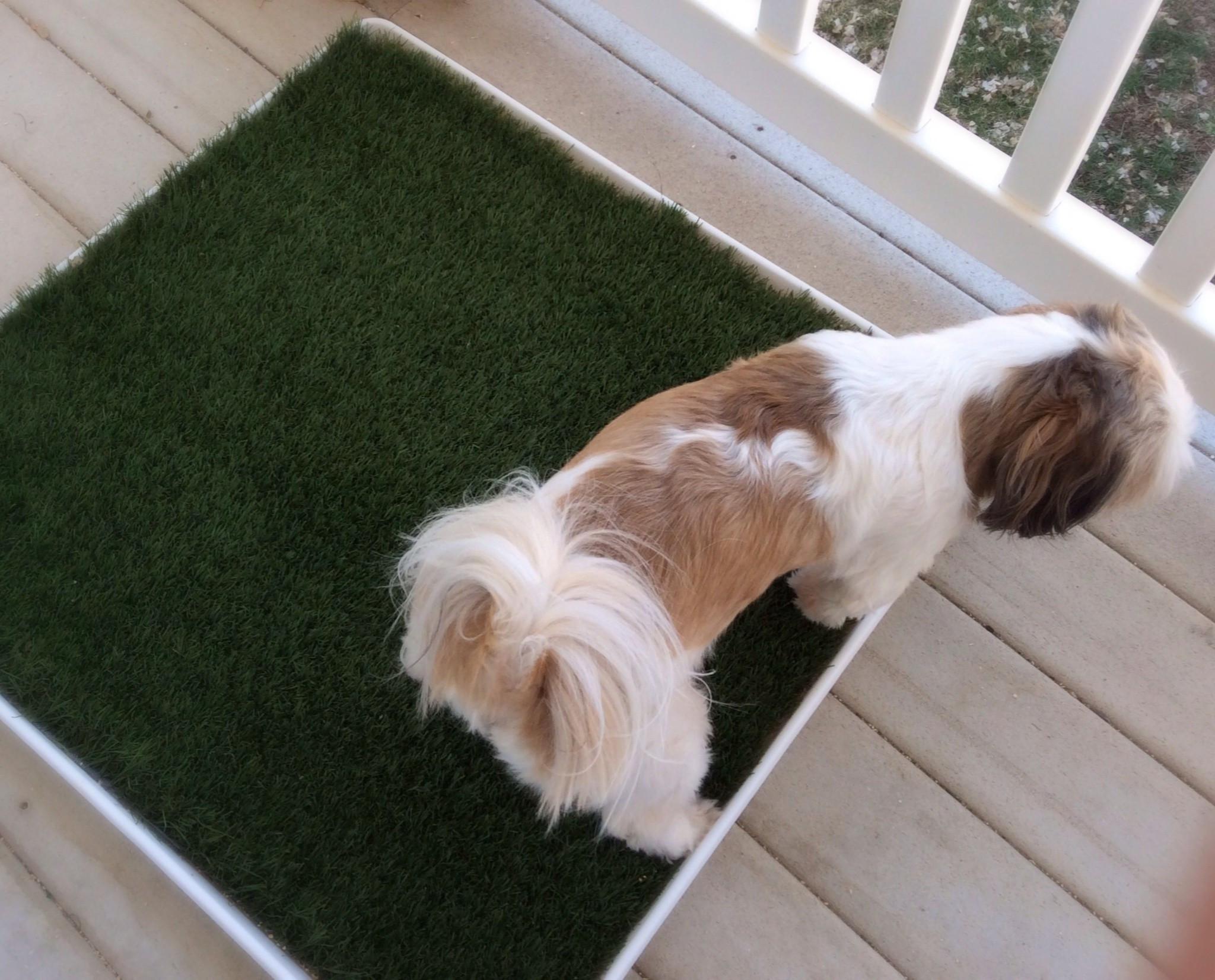 Best ideas about DIY For Dogs . Save or Pin Diy Porch Potty · How To Make A Pet Accessory · Home DIY Now.