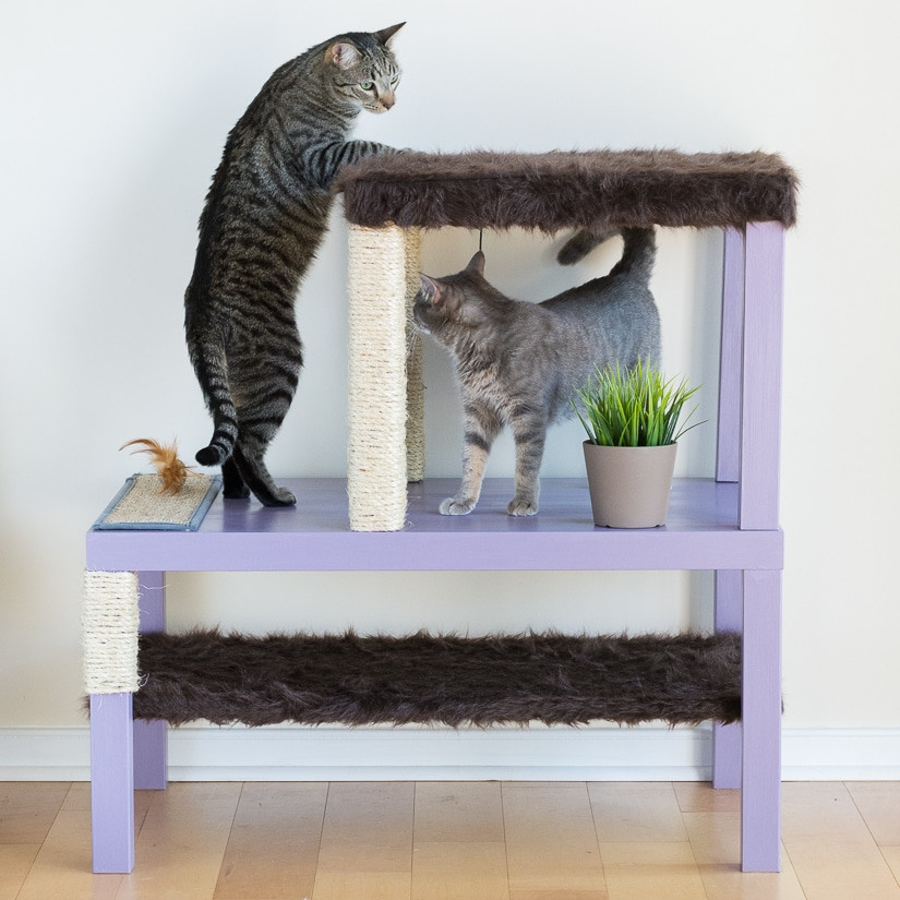 Best ideas about DIY Kitty Condo . Save or Pin Make a Cat Tree Using Real Branches My Amazing DIY Cat Tree Now.