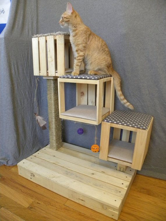 Best ideas about DIY Kitty Condo . Save or Pin Best 25 Cat condo ideas on Pinterest Now.