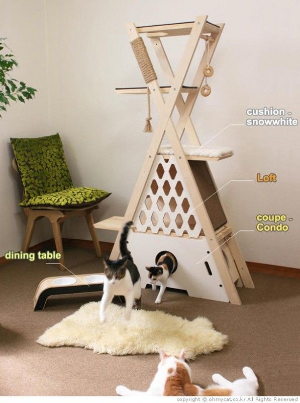 Best ideas about DIY Kitty Condo . Save or Pin 25 best ideas about Cat Condo on Pinterest Now.