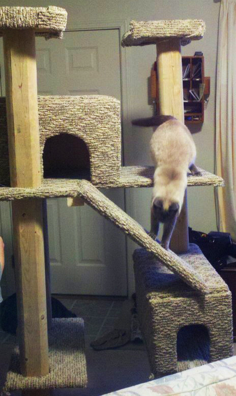 Best ideas about DIY Kitty Condo . Save or Pin DIY Kitty Condo Plans Download do it yourself shoe rack Now.