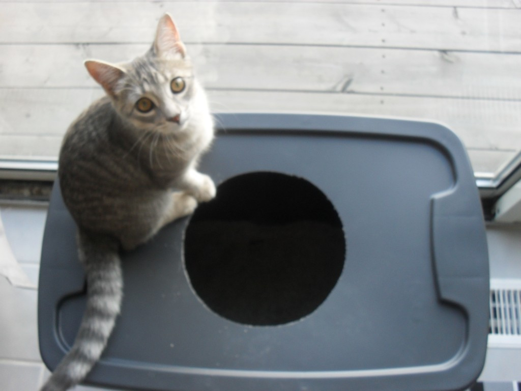 Best ideas about DIY Kitty Litter . Save or Pin DIY Cat Litter Box Tasteful Space Now.